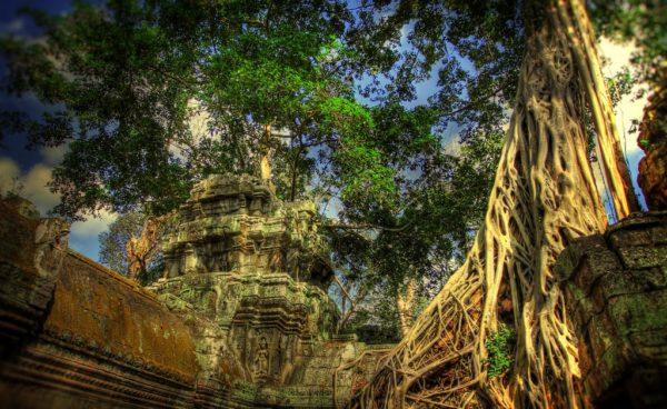корни Фигового дерева в Камбодже